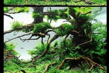 Aquariums and Fish Keeping / Tropical fish and photographs of aquariums