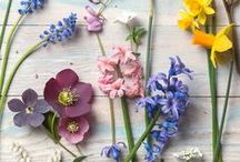 Flowers / Pretty flower photography and inspiration for displaying and arranging flowers
