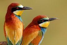 Birds / Photography of beautiful birds