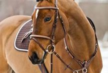 Horses / Horses - markings, breeds, gift ideas for horse lovers, horse themed DIY projects
