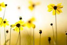 {Secret Garden} / {Spring} / by Helena Hounsel
