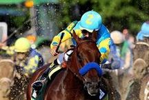 Triple Crown / Grew up in a racing family and we are all still waiting for another triple crown winner!