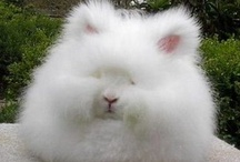 Super Fluffy Rabbits. / Too cute.... Just too cute.