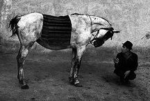 Josef Koudelka / b. 1938, Czechoslovakia. Studied in Prague. Now lives in France and Prague