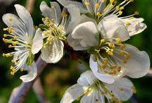 Flowers / Flowers of Karpathos