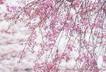 onsen/primavera
