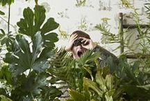 Planten l Plants