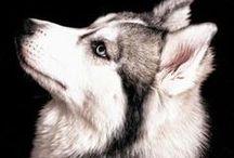 Razas de perros / by Nohemy Zam