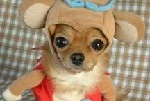 Pet Costumes / Dress your pet up for some extra fun at the race!