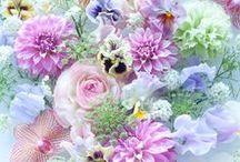 Piante e Fiori / Il nostro assortimento di piante e fiori di ogni tipo e varietà!