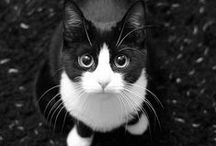 Gatti / I nostri a-mici :-)