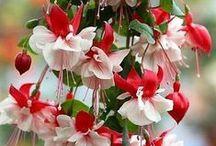 Mílujem  kvety