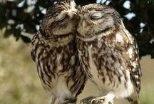 my beloved owl... / I love with owl my heart...