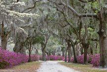 The Carolina's and Georgia / Beautiful place for living  / by Johan Olij