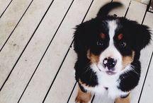 Future pet.