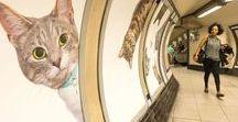 Londra Metrosundaki Kedi Figürleri / Kickstarter'da fonlanan Citizens Advertising Takeover Service (CATS) projesinin ilk ayağı Londra'da vuku buldu ve bütün istasyonun reklam panoları, duvarları ve turnikeleri kedi resimleriyle dolduruldu. :)  https://gezimanya.com/FotoGaleri/londranin-yeralti-istasyonunu-kediler-basti