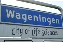 Wageningen city / Wageningen is centrally located in the Netherlands. There are historic and modern buildings, high-rise student flats, works of art and botanical gardens.
