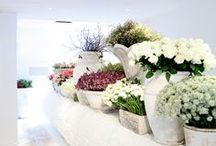 Florists Window Displays