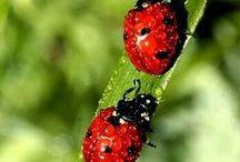 ♥I LOVE YOU♥ - 곤충