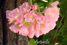 Flowers / Varie