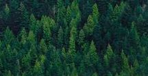 ⇞ forêt ⇞