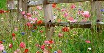 green garden  ✿ / créer son potager, composter, récupérer l'eau de pluie, petit coin prairie sauvage, permaculture...