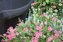 """Gardening for """"Small Spaces"""" / by Ellen B"""