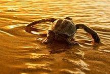 Precious world / Precious Moments Of Animals Life.