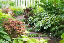 Ogrodnictwo, rośliny