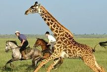 Riding Safaris - Horseback Adventures / #Riding #safaris are a popular and exciting way of viewing #Africa's incredible scenery and #wildlife. There really is nothing more thrilling than cantering alongside elegant giraffe or galloping amongst the great wildebeest migration