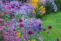 Garten Ideen, Gestaltung / Tipps und Ideen zum Gartengestaltung und Gartenpflege