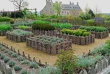 OUTSIDE~Raised Garden Beds