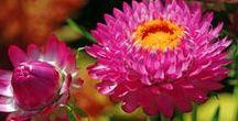 Pflanzen - ziehen, pflegen, vermehren / Pflege, Tipps zum Pfanzen und Überwintern