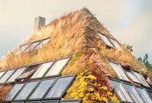 Vertical Gardens~Basics and Beyond