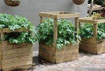 OUTSIDE~Pots and Containers~Wood and Plastic