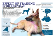 Training / We discuss basic behavioral issues with you such as obedience training, housetraining, and socialization, as well as advanced issues such as inappropriate litter box habits, noise phobias, and separation anxiety.