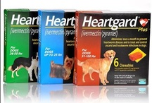 Heartworms, Fleas and Ticks / The Companion Animal Parasite Council has developed important guidelines for protecting pets and pet owners from parasitic infections. St. Francis Animal & Bird Hospital is committed to providing you with these important guidelines and helping you make choices that will protect your loved ones.
