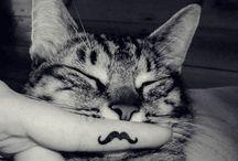 Its a mustas(k)