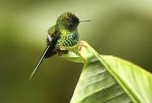 adorable hummingbirds / by Michelle Aligleri