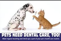 Pet Dental Care / Dental health is important in the overall health of your pet. We place a strong focus on regular dental examinations and at-home dental care such as brushing, oral rinses, dental diets and dental treats/chews.