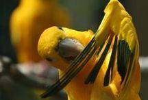 parrot budgerigar