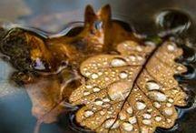 foglie, immagini