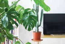 { Inspirations maison } / Idées et inspirations pour la maison ! J'adore les intérieurs minimalistes, avec des éléments en matières naturelles. Ces images me font rêver et me donnent des idées pour décorer ma maison.