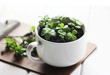 gardening+plants