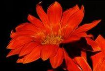 ::::: FLOWERS ::::: / by Alexandra Alex Progovac