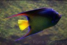 Salwater fish