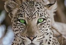 WILD EYES / Eye catching looks from these eye catching animals.