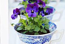 Spring / Spring, Spring Flowers, Spring Scenery, Baby Animals