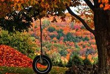 Autumn / Autumn, Fall, Changing Leaves, Colored Leaves, Fall Scenes, Halloween, Fall Decorations, Halloween Decorations