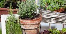 Balkon bepflanzen - so klappt's! / Gärtnern ohne Garten: Hier findest Du nachhaltige Tipps und ausgefallene DIY-Ideen, mit denen du deinen Balkon zum Gartenparadies machst.